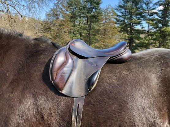 Zelda's saddle is too narrow.