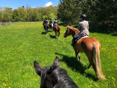 Riding through a field of dandelions