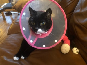 Pounce after his operation