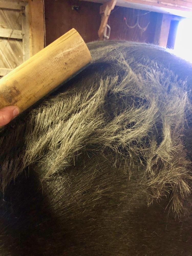 Shedding hair